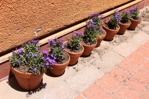 Students planted their own flowers in these pots.